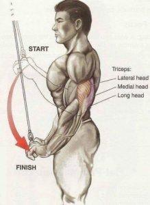 Extensión tríceps en polea ticogym