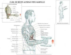 biceps-tipo-martillo