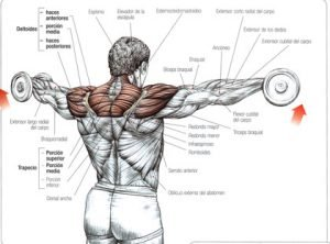 elevacion-lateral-hombro