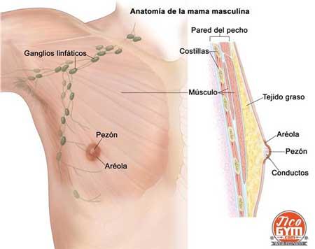 cáncer de seno en el hombre ticogym